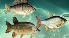 Novos peixes (água doce)